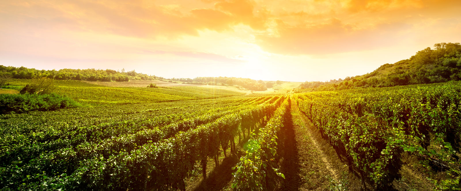 Wine-Tours-South-Africa