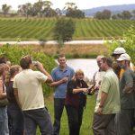 Australian Wine Tours in Victoria's Yarra Valley
